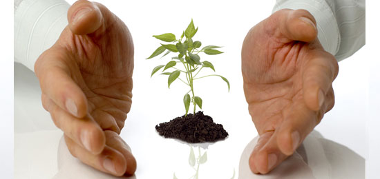 Hands nurturing a small plant